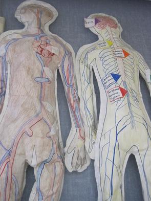 Human body project 3d models